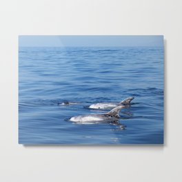 Beautiful risso´s dolphins in Tenerife Metal Print