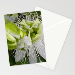 """Passiflora (i)"" by ICA PAVON Stationery Cards"