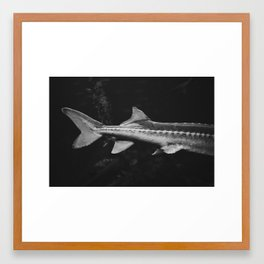 fish tail Framed Art Print