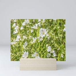 White Anenomes Mini Art Print