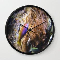 Fish  Wall Clock