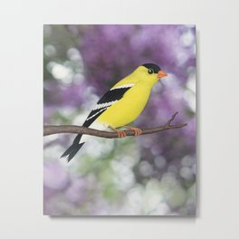 American goldfinch male bokeh Metal Print