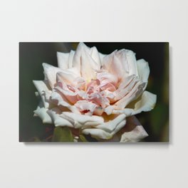 Hollywood Flower Metal Print