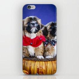 Two Shih Tzu Puppies Wearing Halloween Collars Pose in a Pumpkin Basket iPhone Skin