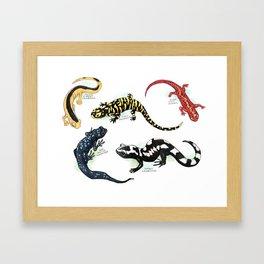 Salamanders Framed Art Print
