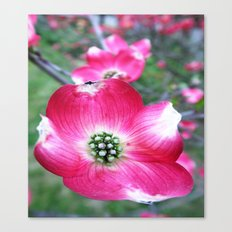 see the beauty in the nature Canvas Print