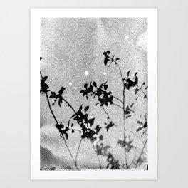 Cement Foliage Art Print
