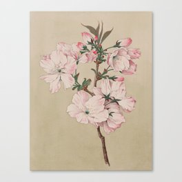 Ariaki - Daybreak Cherry Blossoms Canvas Print
