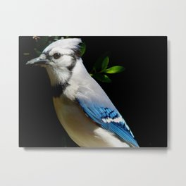 Closer to the Jay Metal Print