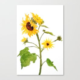 One sunflower watercolor arts Canvas Print