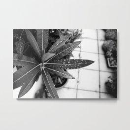 Black Oleander Metal Print