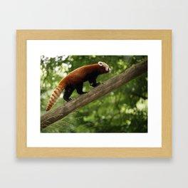 Happy Red Panda. Framed Art Print