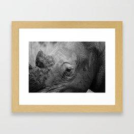 In the eye of the Rhino Framed Art Print