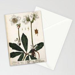 Flower helleborus niger vulgaris flore roseo Stationery Cards