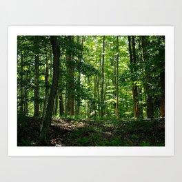 Pine tree woods Art Print