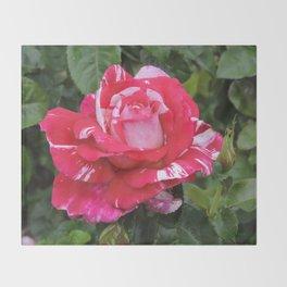 """A Rose Named """"Neil Diamond"""" Throw Blanket"""