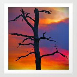 Dead Tree Against Colorful Sky Art Print