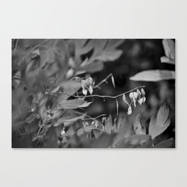 Spring 2016 (25) Canvas Print