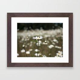 Wildflowers in an Oregon Field Framed Art Print