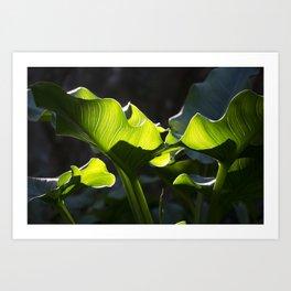 Green Contrast - Light and Dark Art Print