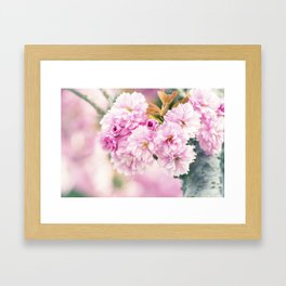 Kanzan Cherry - Japanese Flowering Cherry Framed Art Print