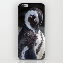 African Penguin iPhone Skin