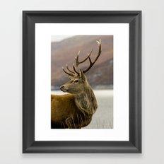 Autumnal Stag Framed Art Print