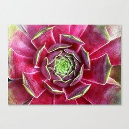 """Sempervivum """"Ipf"""" Canvas Print"""