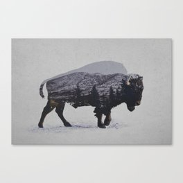 The American Bison Canvas Print