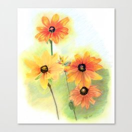 Gloriosa Daisies Canvas Print