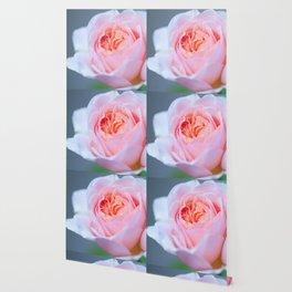 Forever in Love - Pink Rose #1 #decor #art #society6 Wallpaper