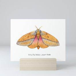 Bisected Honey Locust Moth (Sphingicampa bisecta) Mini Art Print