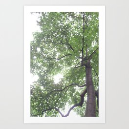 Summer Rays Art Print