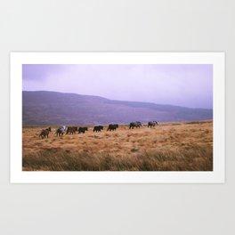 Horse Line Art Print