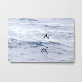 Puffin Flying Metal Print