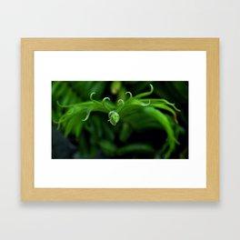 Laurels Fern 2 Framed Art Print