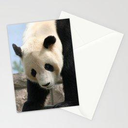 Panda20170506_by_JAMFoto Stationery Cards