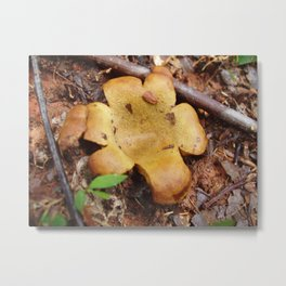 Mushroom Original Photograph Metal Print