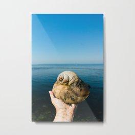 Moon Snail Metal Print