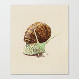 Snail Two Canvas Print