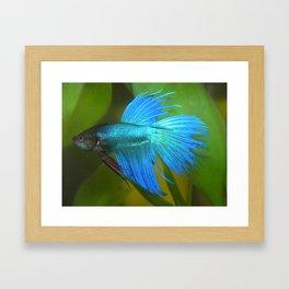 Blue Betta Fish Framed Art Print