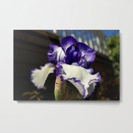 Iris I May, Iris I Might Metal Print