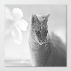 Winford Kitty Canvas Print