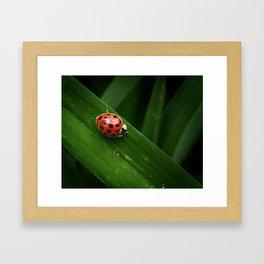 Little Lady Framed Art Print