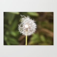 A weed. Canvas Print
