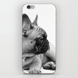 FrenchBulldog Puppy iPhone Skin