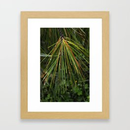 Sappy Multicolor Pine Needles Framed Art Print