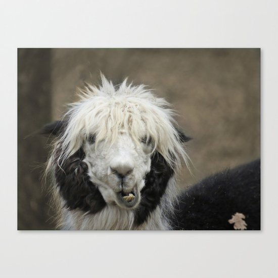 Funny alpaca Canvas Print