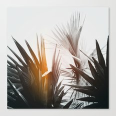 Flare #1 Canvas Print