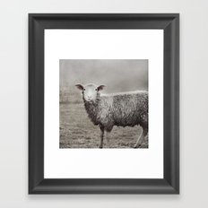 The Sheep Framed Art Print